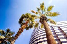 Modern California Office tower with palm trees lens flare stock photo