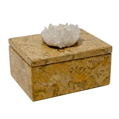 Small Fossilized Coral Box with Himalayan Crystal