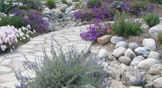 lose the lawn and change our California mindset for the drought: Mediterranean Landscape by Jean Marsh Design