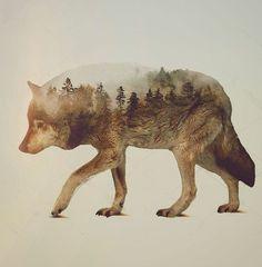 Double exposure - Wolf vs forest #nature #art #graphism #artist #artista #artwork #graphist #graph #wolf #animal #design #designer #l4l #l4like #like4like #f4f #travel #landscape #photo #photoshop #photography #me #love #animal