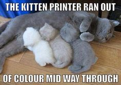 24 Funny Cats and Kittens Pictures | Funny Animals, Funny Cat | DomPict.com