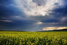 "Canola field landscape framed photo print - wall art - nature - yellow flowers - ""The Luminous Landscape XXX."" by Zsolt Zsigmond - SKU0126"