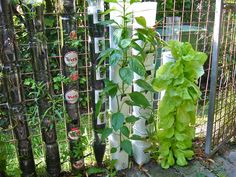 DIY Vertical Tower Gardens - This is WONDERFUL. He gives step-by-step instructions and uses all sorts of stackable containers to make these. All one needs is a fence or trellis for support. A definite MUST TRY.