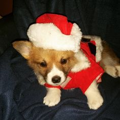 This festive corgi pup who is super excited to meet his forever fam. | 16 Puppies Who Were Under The Tree This Christmas Morning
