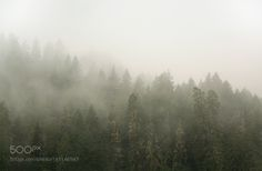 Through the Fog by afilteredlife