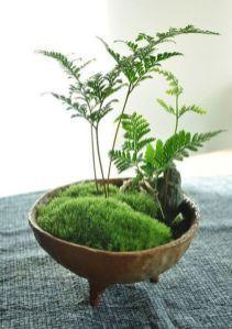 Mini Succulent Garden 37