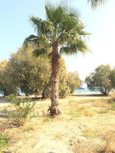 Lambi, Kos, Greece