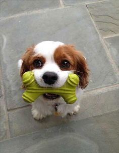 cute animals   ...........click here to find out more     http://googydog.com