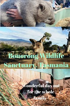 Bonorong wildlife sanctuary, Tasmania - a must visit that's enjoyable for the whole family