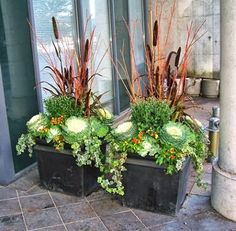 Millet and coral-twig dogwood combine with cabbage and kale for a long-lasting fall planter.