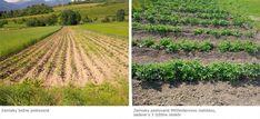 Mittleiderova metóda úzkych záhonov pre pestovanie zeleniny 2/3 - OZ Biosféra Vineyard, Outdoor, Compost, Outdoors, Vine Yard, Vineyard Vines, Outdoor Games, The Great Outdoors