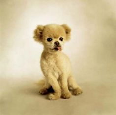 Why Do Small Dogs Help with Hypoallergenic Conditions