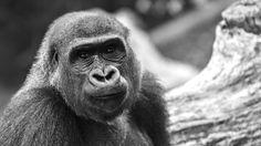 Photography, Animals, Fotografie, Animales, Photograph, Animaux, Animal, Animais, Fotografia