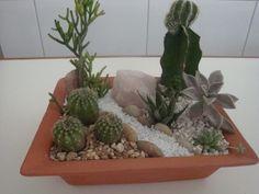 Jardim de suculentas e mini cactos. Fotografia: Flores - Cultura Mix.