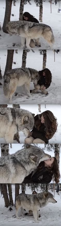 Alone In The Forest She Finds A Huge Wolf. But Look Closely At His Face… I Can't Stop Smiling! (VIDEO) #wolf #colorado #love #wildlife