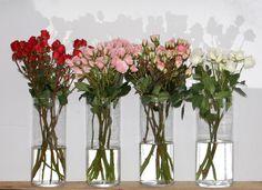 ¡Del rojo al blanco!  #rosas #rosasramificads #rosasspray #rosasdepitimini #pitimini