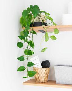#minimal #diy #mynordichome #howimonochrome #handmademodernhome #howyouhome ##iloveplants #houseplants #plantlady #diy #jungalow