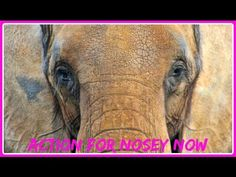 Action For Nosey Now 2015  - Take Action to Help Nosey the Elephant