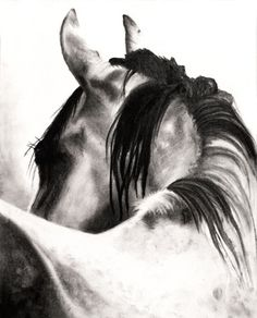THE LOOK, Charcoal Drawing of a Horse, Black and White, Contrast