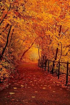 Orange pathway