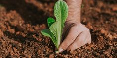 Αυτή την εποχή φυτεύουμε φθινοπωρινά κηπευτικά, κάνουμε ελαφρύ κλάδεμα σε καλλωπιστικά και αρωματικά φυτά, καθώς και μεταφύτευση όπου χρειάζεται. Herbs, Flowers, Plants, Gardening, Tape, Lawn And Garden, Herb, Plant, Royal Icing Flowers