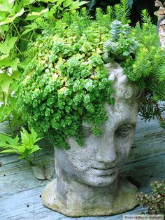 "My succulent ""head"" container is coming along! (In Bonnie Helander's garden)"