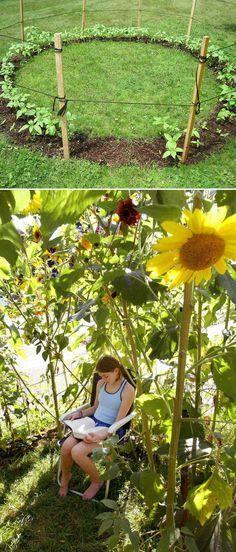 Cultive uma casa de girassóis para as crianças brincarem dentro.