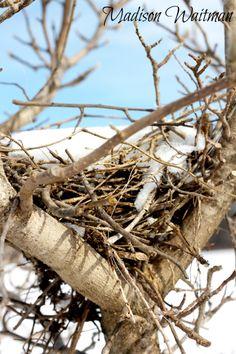 Bird's nest in winter...Madison Waitman Photography