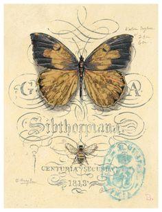 Art Print: Honeybee Papillon by Chad Barrett : Vintage Butterfly, Butterfly Art, Chad Barrett, Collages D'images, Art Papillon, Etiquette Vintage, Foto Transfer, Transfer Paper, Images Vintage