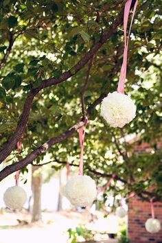 Pompadour ' s with Pink satin ribbon ribbon  hang from a tree for a wedding + reception.