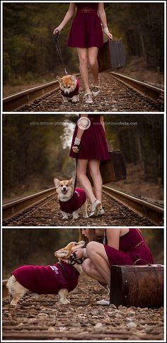 Corgi | senior portraits | maroon | Ms State University