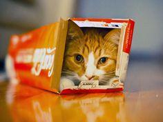 Charlie in a Coke box...