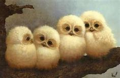Baby barn owls!