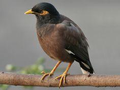 Sitanadi Wildlife Sanctuary - in chhattisgarh, India