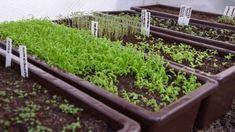 Samos, Plants, Plant, Planting, Planets
