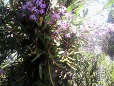 ~sol e flores