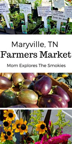 The Maryville Tennessee farmer's market offers farm-fresh food, artisan crafts, baked goods, live entertainment and more!