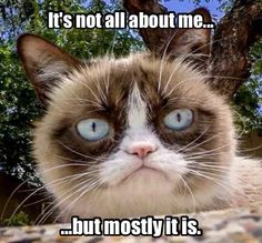 The official grumpy cat all about cats Grumpy Cat Quotes, Grump Cat, Funny Grumpy Cat Memes, Funny Animal Memes, Funny Cat Videos, Funny Animal Pictures, Funny Cats, Funny Animals, Dog Cat