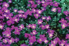 The Best Plants For Rock Gardens   Plants for Rocky Soil   HGTV
