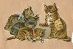 Prints and Photographs, Special Collections, Library of Virginia. cat pet Victorian scrapbook die cut vintage clip art free for personal use Vintage Cat, Old Paper, Animal Photography, Paper Dolls, Dog Cat, Clip Art, Victorian, Pets, Ephemera