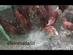 Do maggot farms actually work and what about the smell. - YouTube