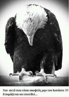 PLOES: Γιατί τον αετό δεν κάνει να τον υποτιμάς!!!!!! Bald Eagle, Bird, Animals, Wave, Animales, Animaux, Birds, Animal, Animais