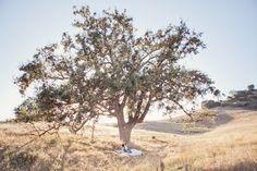 Vintage wedding, Dallas Photographer Caroline Joy. Where is this beautiful tree?