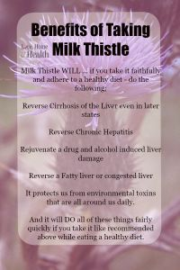 Benefits of Milk Thistle - Have you almost destroyed your liver with alcohol or a bad diet?  Milk Thistle can make your liver bounce back like it's a little tennis ball being used to play Seven Up on the side of a house on a warm summer afternoon.