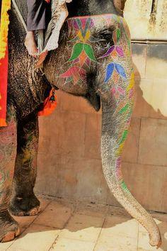 Elephant, India, Animals, Goa India, Animales, Animaux, Animal, Animais, Elephants