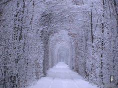 Tunnel of Love during Winter (Ukraine)