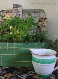 Make a Kitchen Herb Garden - love that it's in an old breadbox! - At Home on the Bay