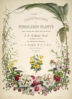 Illustrations of Himalayan plants :chiefly selected from drawings made for the late J.F. Cathcart, Esquire of the Bengal Civil Service; 1855 : Missouri Botanical Gardens via BHL - title page