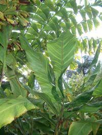 Subtropicals Feature Plant