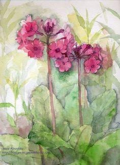 木下美香的日常植物速写